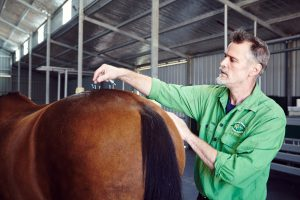 acupunture, holistic veterinary medicine in horse