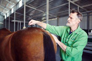 acupunture, holistic veterinary medicine in horse